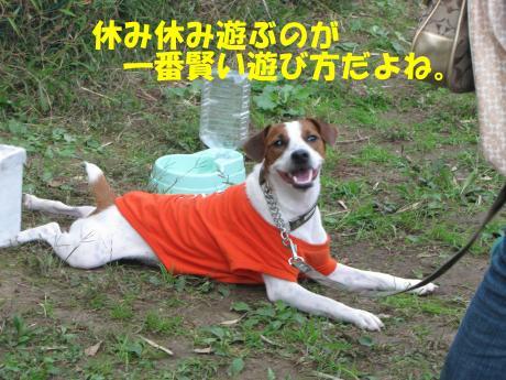 縺・§繧・▲縺擾シ托シ神convert_20091018214945[1]