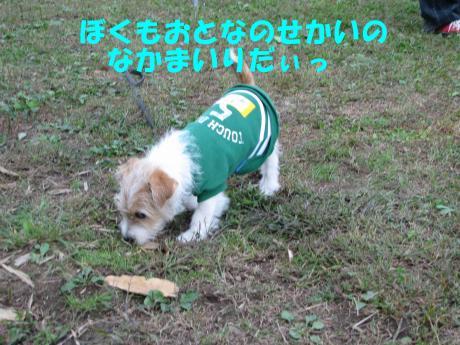 縺・§繧・▲縺擾シ棒convert_20091018215825[1]