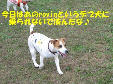 縺・§繧・▲縺擾シ托シ農convert_20091018215158[1]