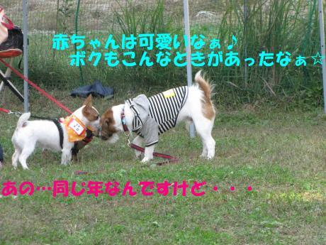 繝ゥ繝ウ10_convert_20091025001001[1]