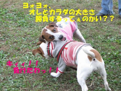 繝ゥ繝ウ32_convert_20091025001446[1]
