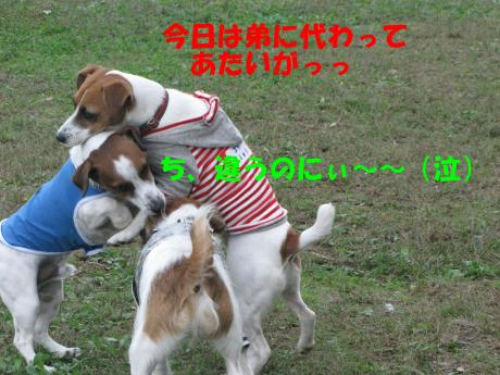 繝ゥ繝ウ20_convert_20091025003932[1]