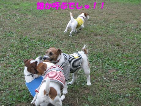 繝ゥ繝ウ24_convert_20091025004148[1]