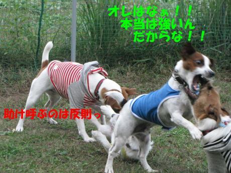 繝ゥ繝ウ25_convert_20091025004218[1]