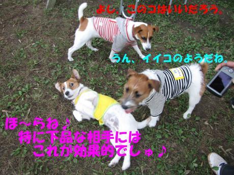 繝ゥ繝ウ31_convert_20091025004614[1]