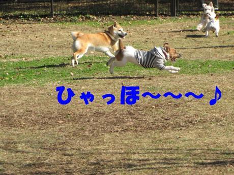 繝ェ繝吶Φ繧ク5_convert_20091104212116[1]