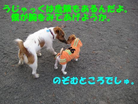 縺ョ縺ウ縺溷菅6_convert_20091107185657[1]