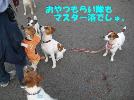 縺ョ縺ウ縺溷菅5_convert_20091107185629[1]