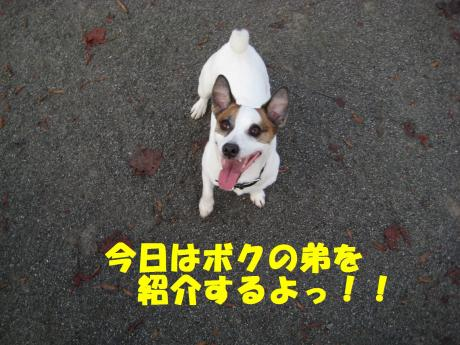 縺ョ縺ウ縺溷菅1_convert_20091107185435[1]