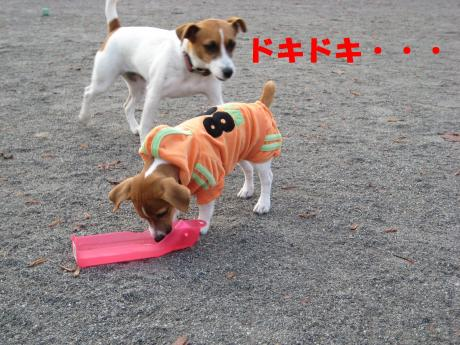 縺ョ縺ウ縺溷菅3_convert_20091107185536[1]