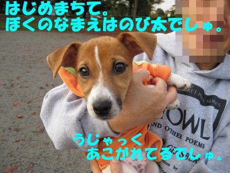 縺ョ縺ウ縺溷菅2_convert_20091107185458[1]
