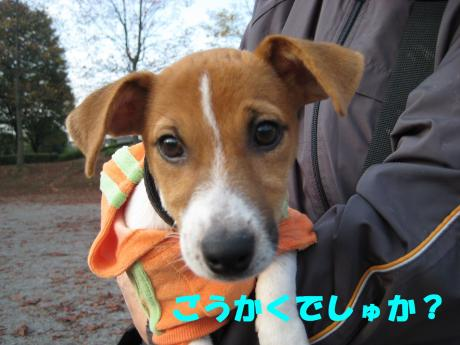 縺ョ縺ウ縺溷菅7_convert_20091107185720[1]