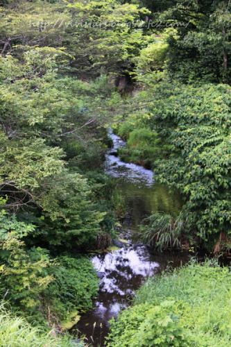 白糸の滝へと続く小川02