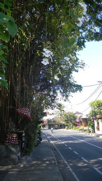 2010.バリ島13