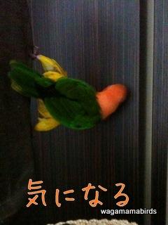 20110801002.jpg