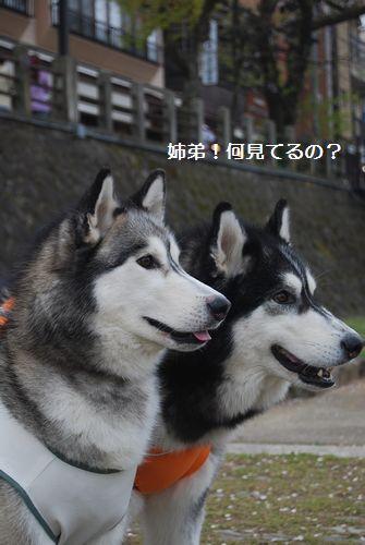 20110503takayama4.jpg