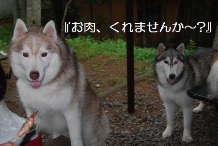 20110815(7).jpg