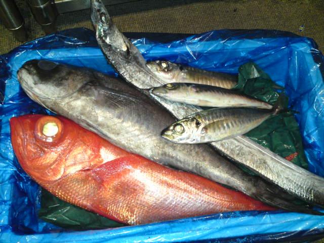 長井鮮魚1
