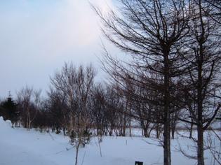普通の冬木立