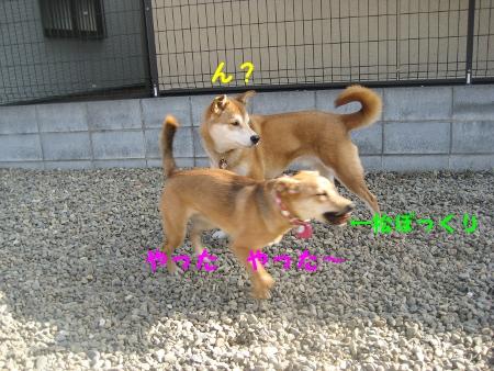 20100131-4.jpg