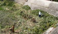 市が草木の伐採-20020503-1