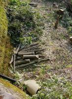 市が草木の伐採-20020503-2
