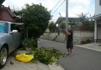 庭木の剪定作業
