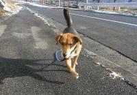 散歩20101231-3