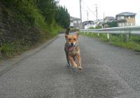 散歩20110826-1