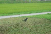 散歩20110826-3