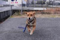 散歩20101228-2