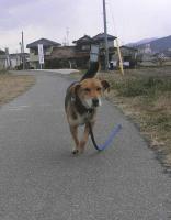 散歩20101229-3