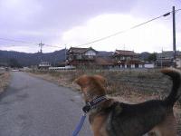 散歩20101229-4