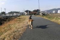 散歩20101230-3