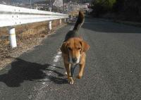散歩20110127-3