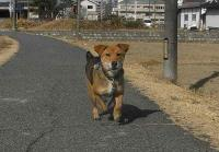 散歩20110127-4