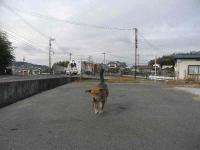 散歩20110128-1