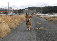 散歩20110128-3