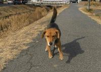 散歩20110129-2
