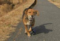 散歩20110129-3