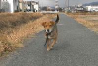 散歩20110129-4