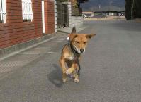 散歩20110130-1
