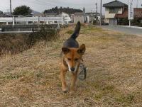 散歩20110130-4