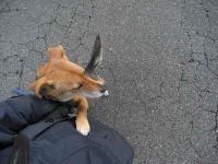 散歩20110131-1