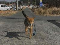 散歩20110131-2