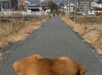 散歩20110131-3