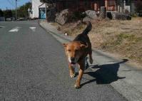 散歩20110222-1