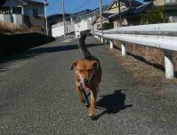 散歩20110222-2