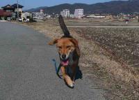 散歩20110222-3