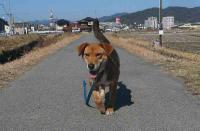 散歩20110222-4